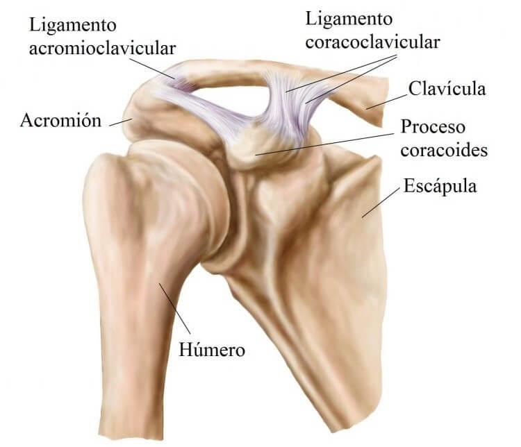 Articulación del hombro - Mejor con Salud