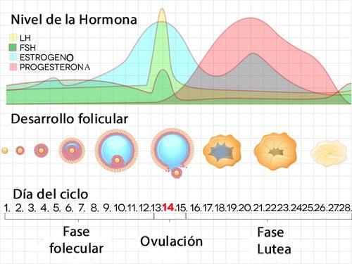 Los valores de la hormona estimuladora del folículo