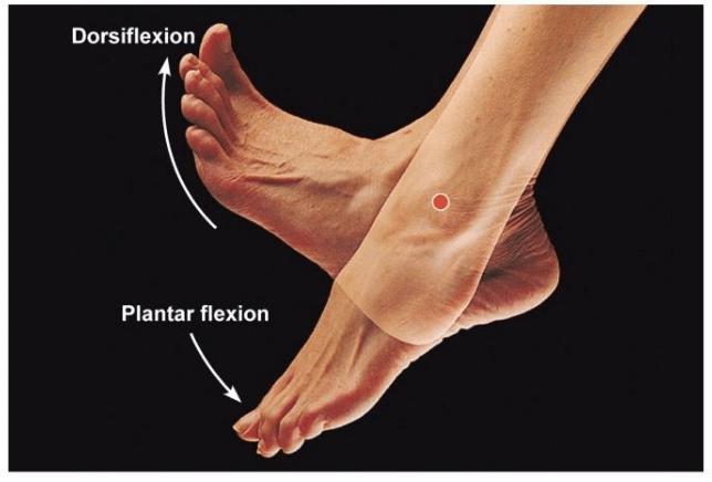 Movimientos del tobillo