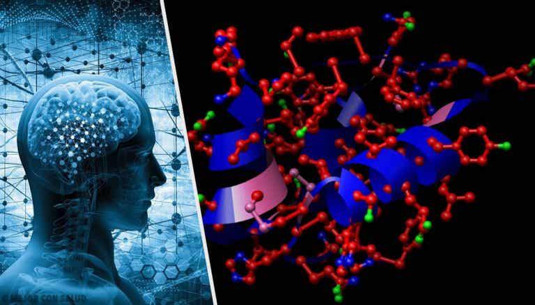 Somatostatina: síntesis y funciones