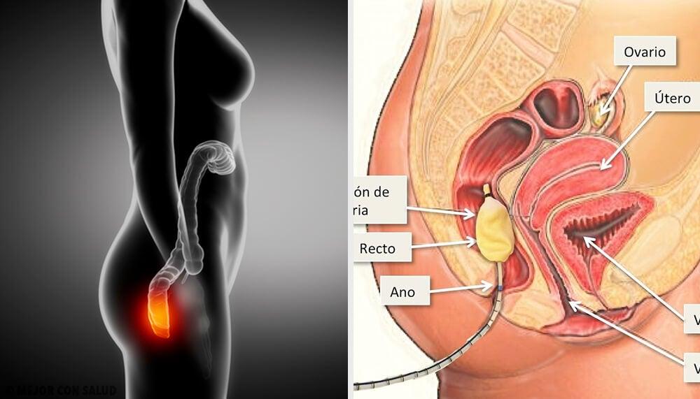 Anatomía del ano y el recto – Mejor con Salud
