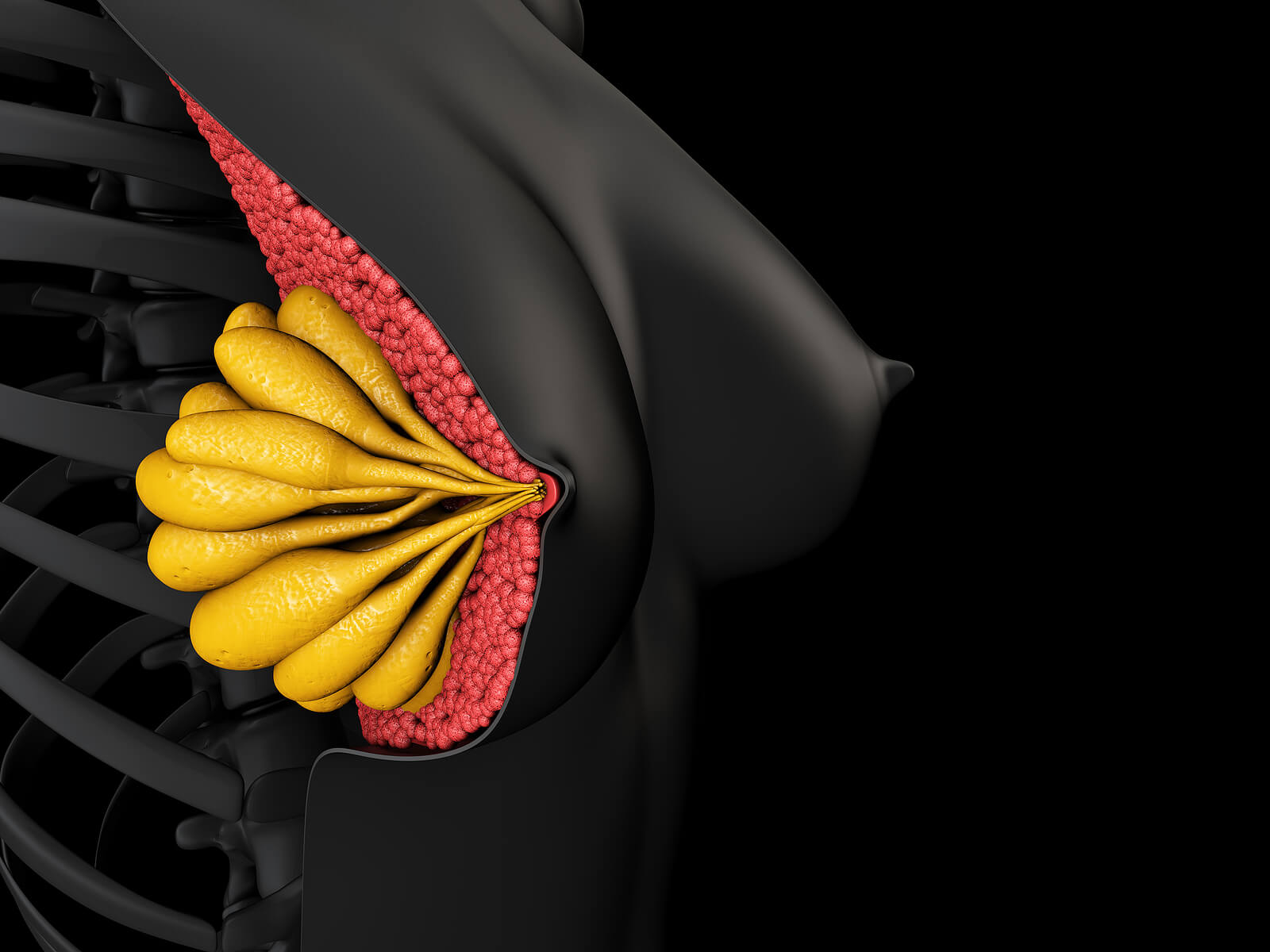 Anatomía de la mama femenina sana.