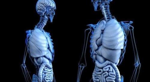 9 cosas del cuerpo humano que probablemente no sabías