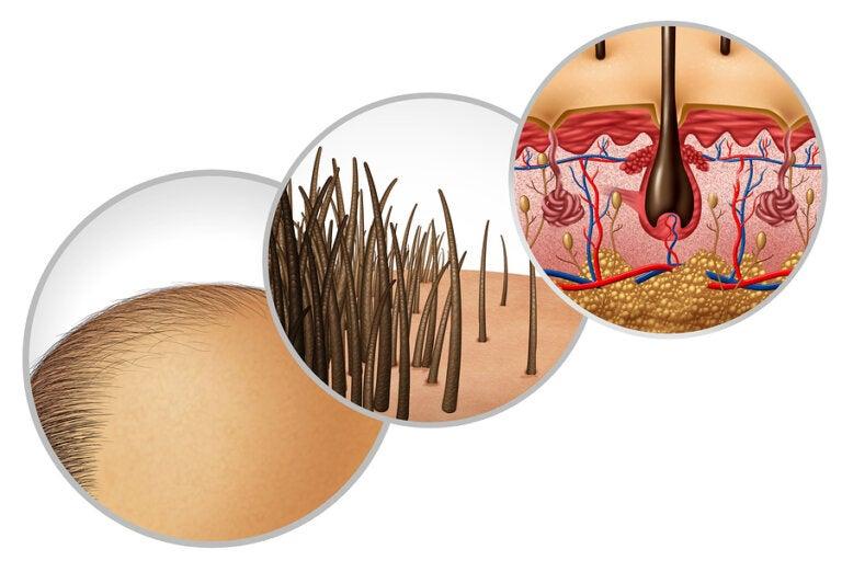 Anatomía y función del folículo piloso