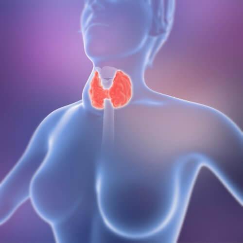 Hormonas tiroideas.