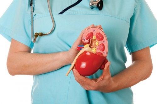 ¿Cuáles son los pesos y medidas de los órganos?