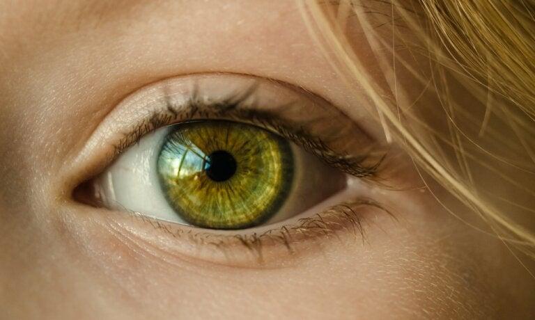 El sentido de la vista y las partes del ojo