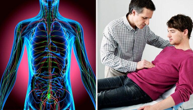 El sistema nervioso autónomo