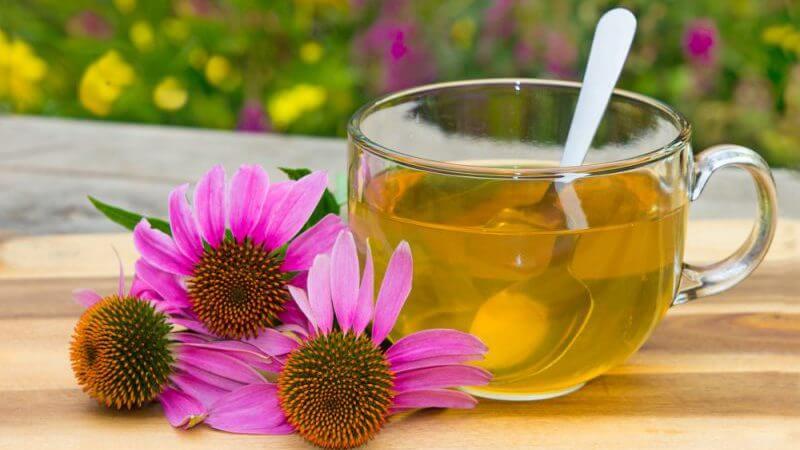 5 remedios herbales para calmar la cistitis