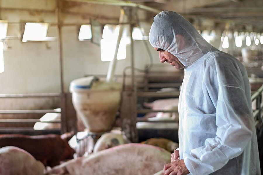Fazenda de produção de alimentos