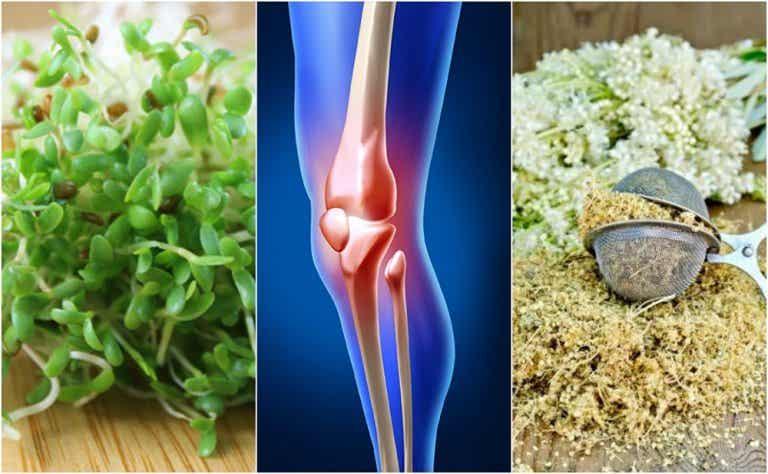 5 remedios herbales que te ayudan a cuidar tus huesos