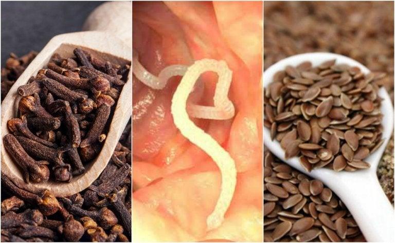 Cómo eliminar los parásitos de tu cuerpo con clavo seco y linaza