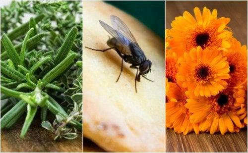 Cómo repeler las moscas de tu hogar con 5 remedios caseros