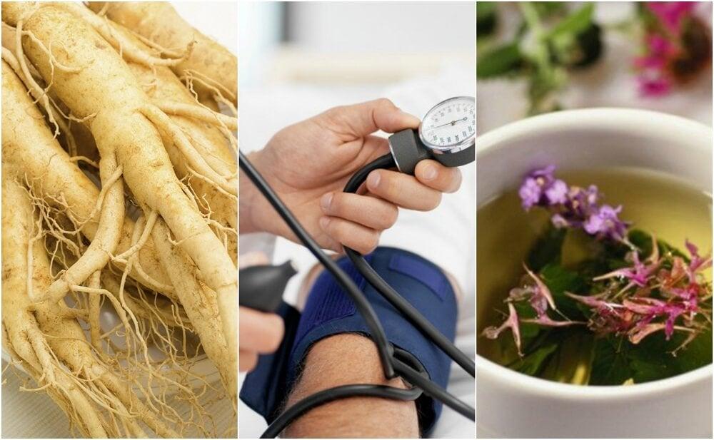 Cómo tratar la tensión baja con 6 remedios herbales