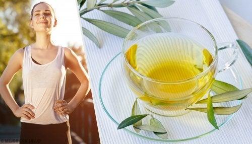 Descubre todos los beneficios de la hoja de olivo para tu salud