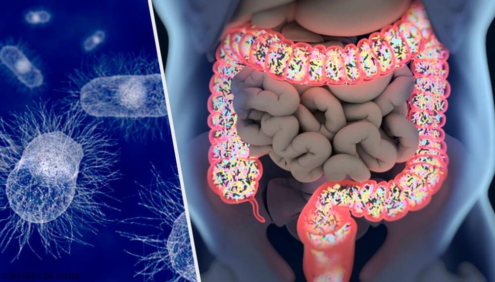 Escherichia coli: todo lo que debes saber