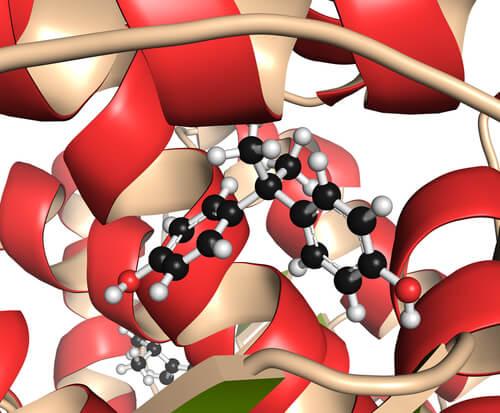 Funciones de estradiol (2)