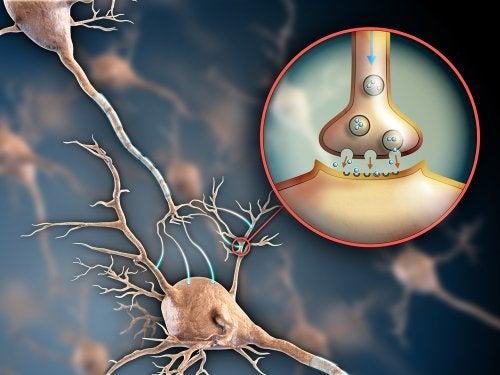 Funciones de la encefalina