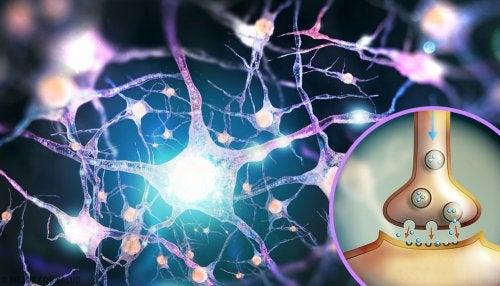 Glutamato: el neurotransmisor excitador por excelencia