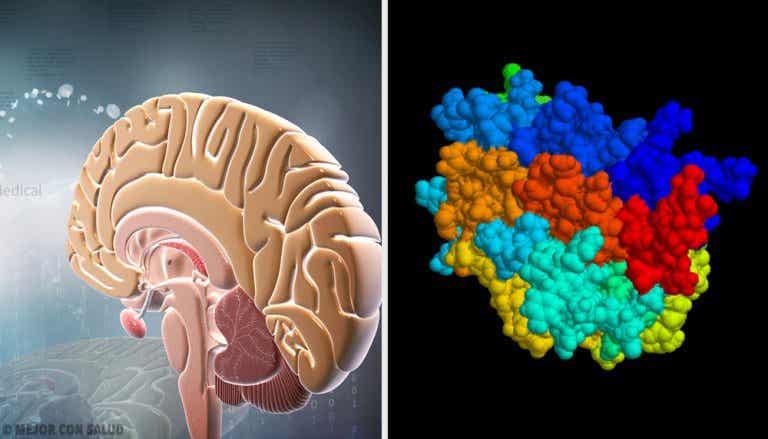 Hormona del crecimiento: qué es y cómo actúa