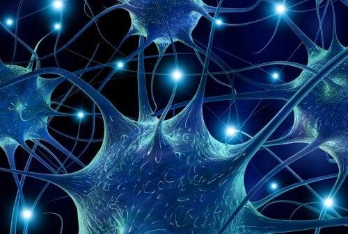 Serotonina: qué es y cómo actúa