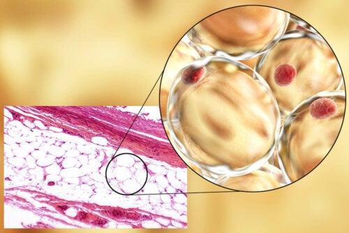 Adiponectina: qué es y cómo actúa