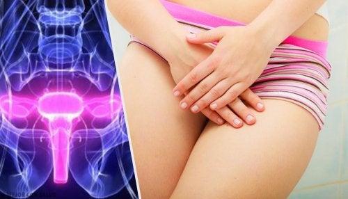 Anatomía de la vagina