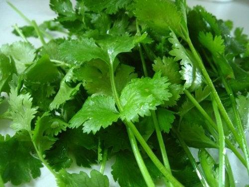 Beneficios del cilantro.