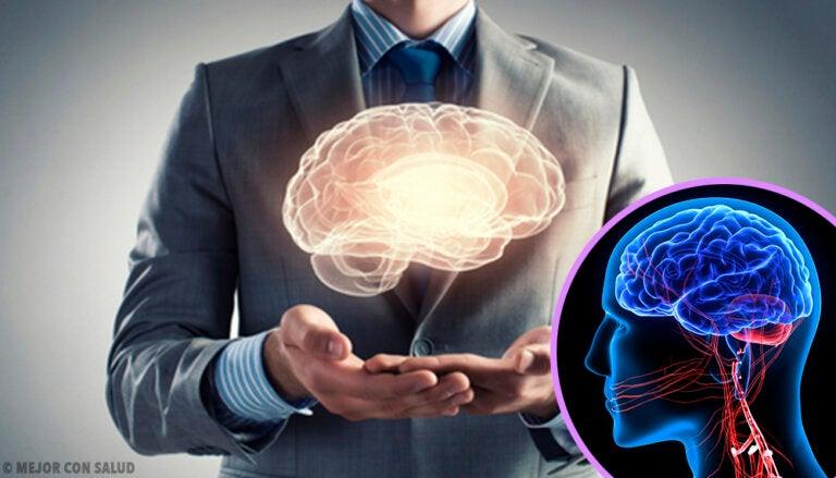 Fisiología del cerebelo
