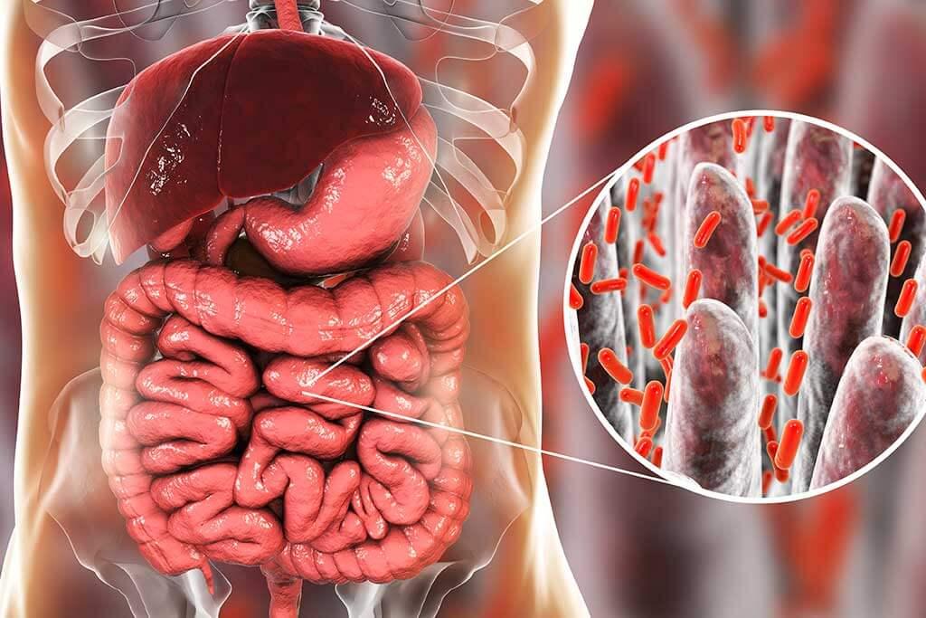 Flora intestinal: todo lo que debes saber