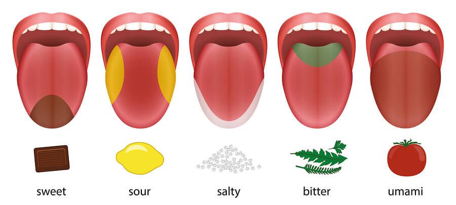 Los sabores en la lengua