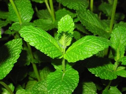 Tus plantas se verán beneficiadas si utilizas vinagre en el jardín.
