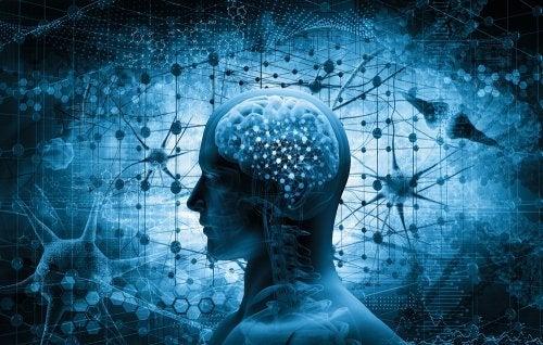 cerebro que libera endorfinas