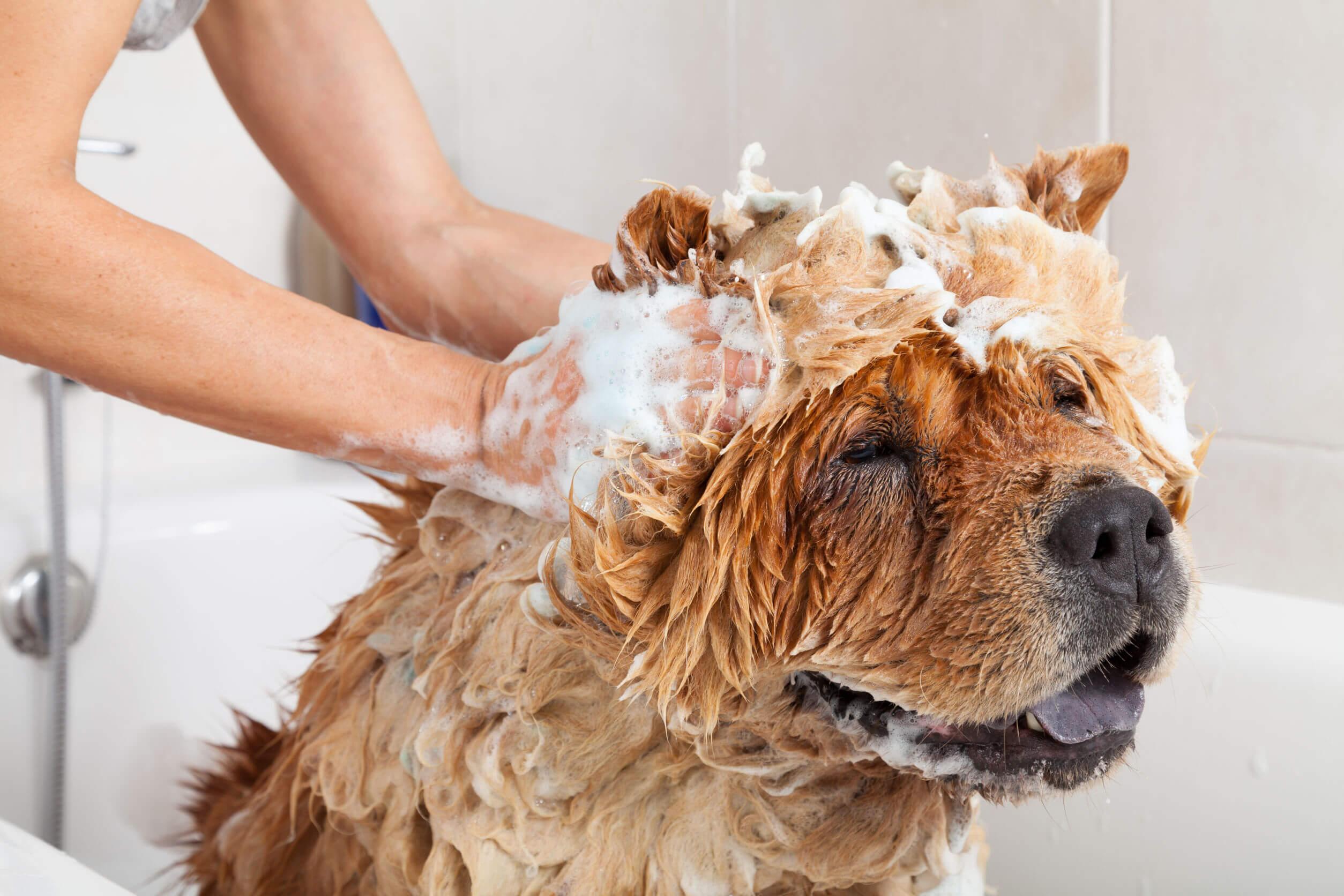 Para mantener limpio el hogar es necesario ocuparse de la higiene de las mascotas.