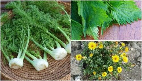 8 plantas que no sabías que eran comestibles