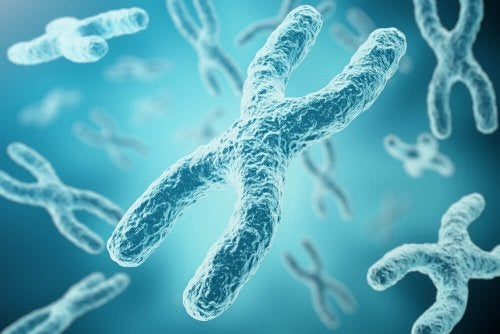 Inactivación cromosoma x