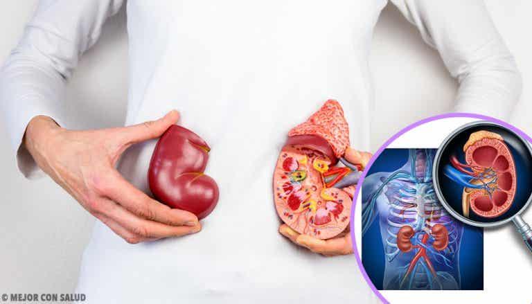 5 cosas que debes saber sobre el trasplante de riñón