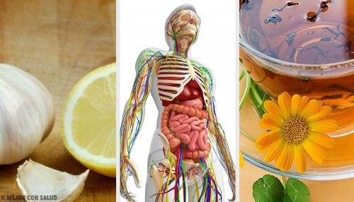 6 remedios naturales para desintoxicar el sistema linfático