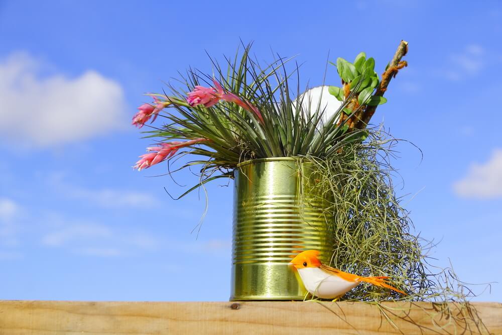 Mini jardín en latas recicladas