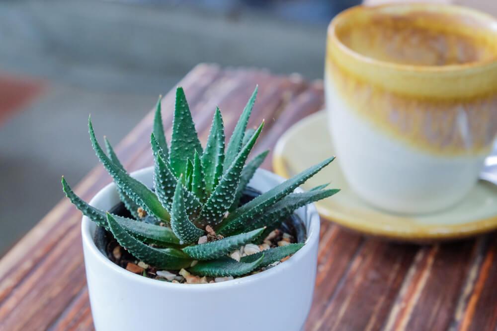 Beneficios del aloe vera y otras plantas en casa