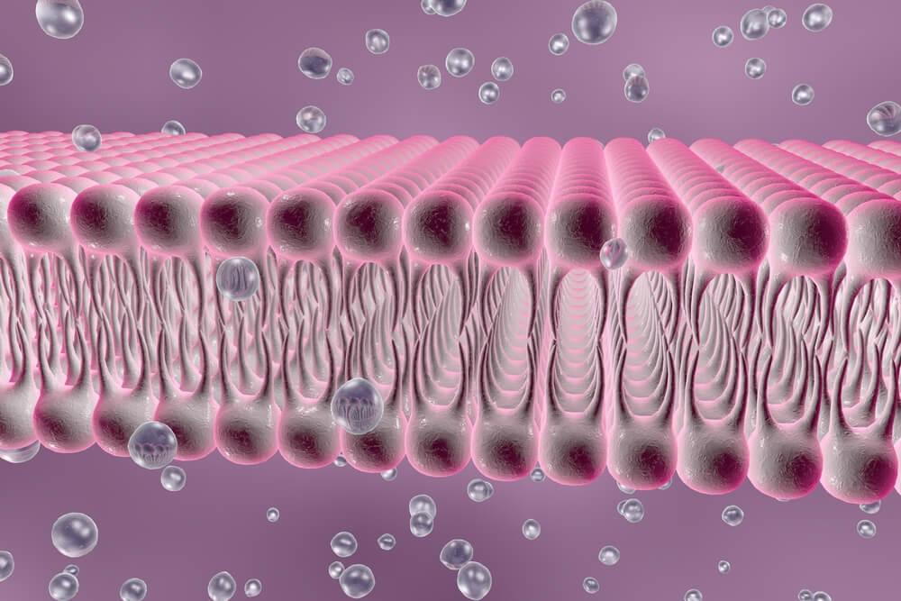 Tipos de canales iónicos en el organismo