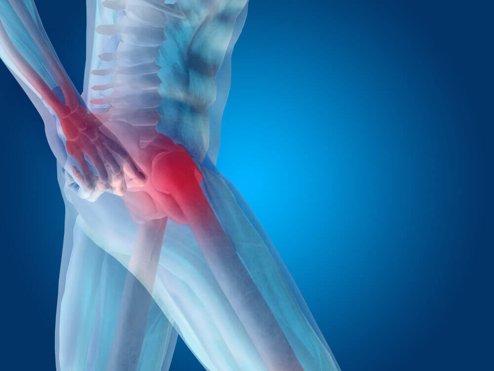 Articulación de la cadera.