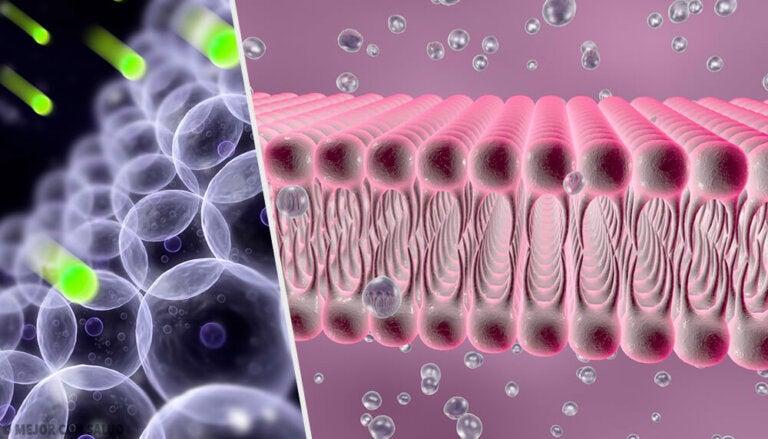 Canales de cloro: todo lo que debes saber