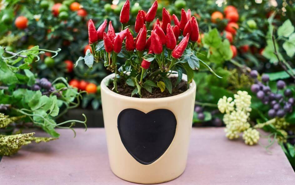 Maceta con relieve pintada con la forma de un corazón.