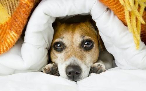 Situaciones graciosas en la cama con tu perro