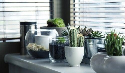 5 maneras creativas de tener plantas en tu casa