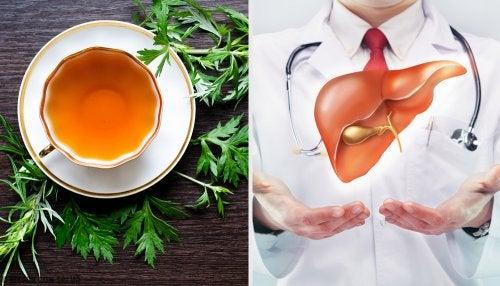 9 propiedades del ajenjo para la salud de nuestro hígado
