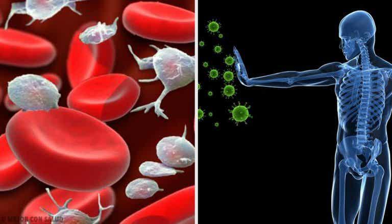El sistema inmune: nuestro ejército contra las enfermedades.