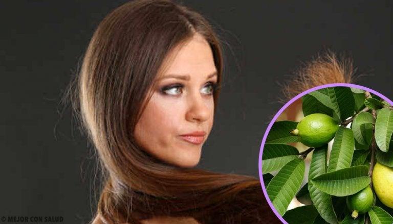 Hojas de guayaba para el cabello maltratado