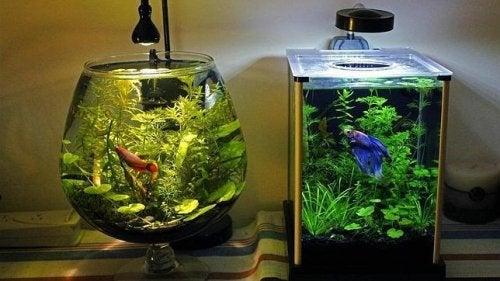 La mejor manera de limpiar el acuario